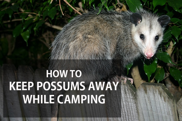 How to Keep Possums Away While Camping