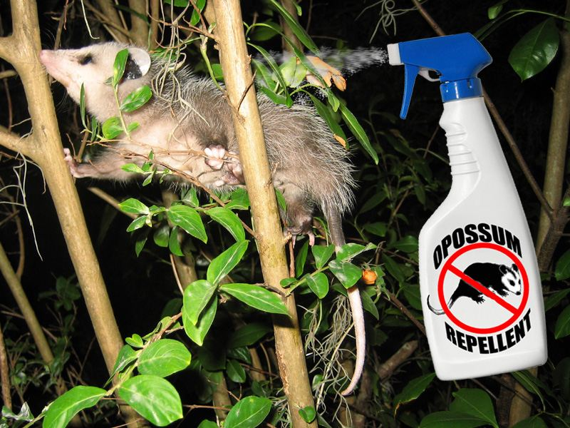 OPOSSUM REPELLENT - How to Keep Possums Away While Camping