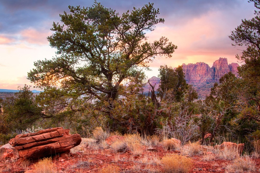 5 of the Best Free Camping near Zion National Park