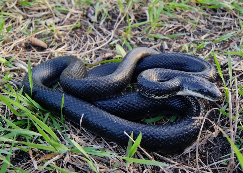 Snakebites – A Complete Guide To Surviving A Snake Encounter